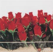 Розы для праведников. 2002