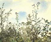 Татарник на фоне голубого неба. Ольшанка. Конец 1870 – начало 1880-х