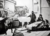 ПАВИЛЬОН КРАЙНЕГО СЕВЕРА НА НИЖЕГОРОДСКОЙ ВЫСТАВКЕ 1896 ГОДА. ФОТОГРАФИЯ