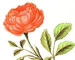 Приглашаем на День Цветов в саду у Пушкина   Государственный музей А.С. Пушкина